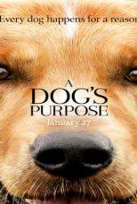 دانلود زیرنویس فیلم A Dog's Purpose 2017